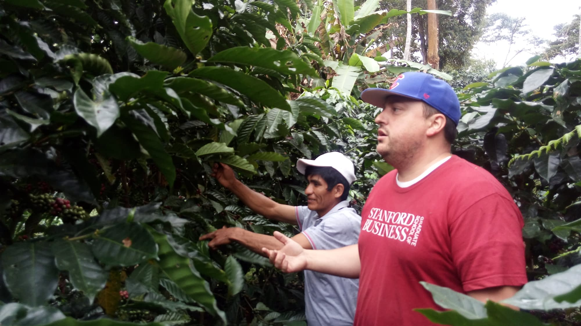 Experteering professional, Jeremy, among the coffee plants in Satipo.